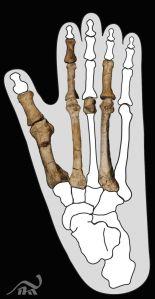 pie-hominido